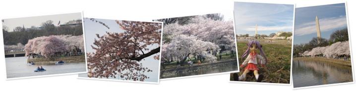 View DC Cherry Blossom Festival